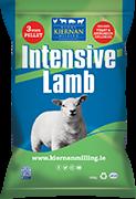 Intensive Lamb